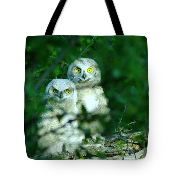 Two Young Owls Tote Bag by Jeff Swan