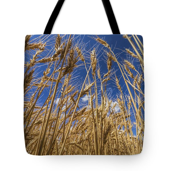 Tote Bag featuring the photograph Under The Wheat by Rob Graham