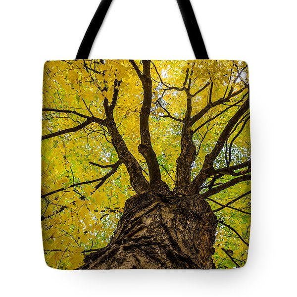 Under The Yellow Canopy Tote Bag by Debra Martz
