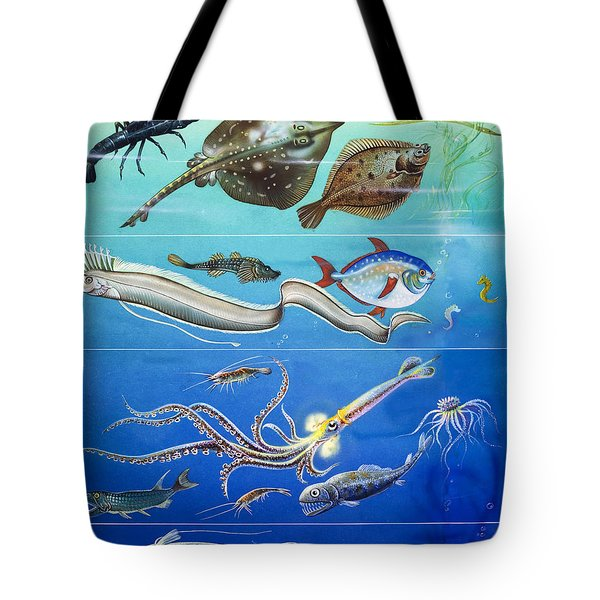 Underwater Creatures Montage Tote Bag by English School
