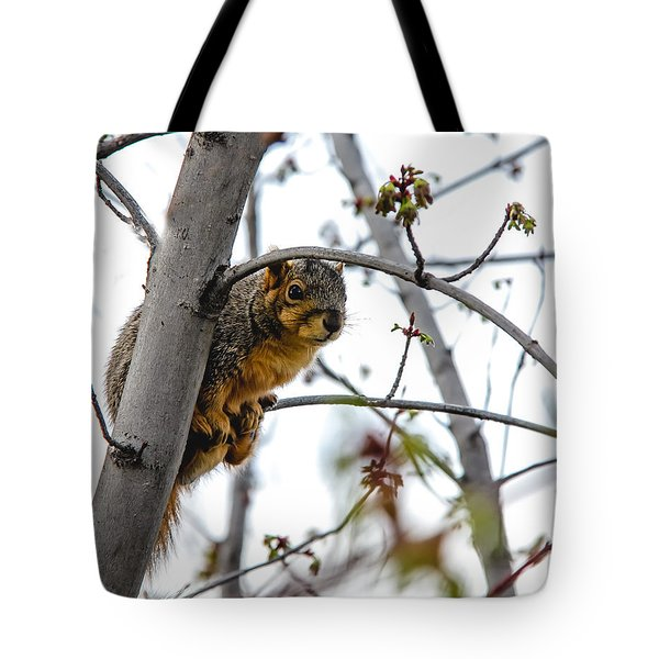 Up The Tree Tote Bag by Robert Bales