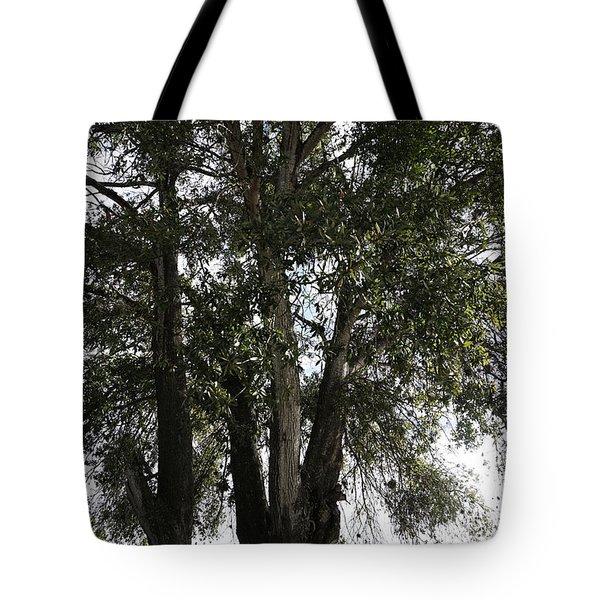 Up-view Of Oak Tree Tote Bag