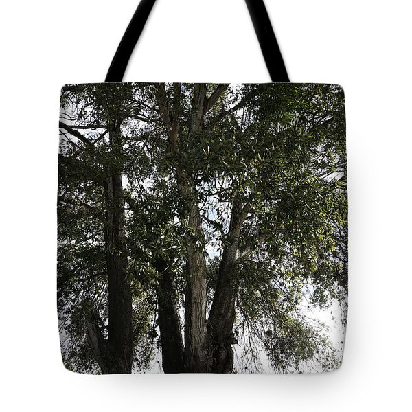 Up-view Of Oak Tree Tote Bag