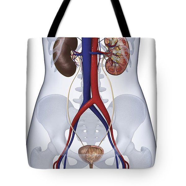 Urinary System, Illustration Tote Bag
