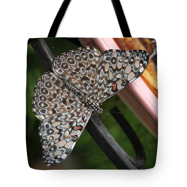 Tote Bag featuring the photograph Variable Craker Butterfly #2 by Judy Whitton