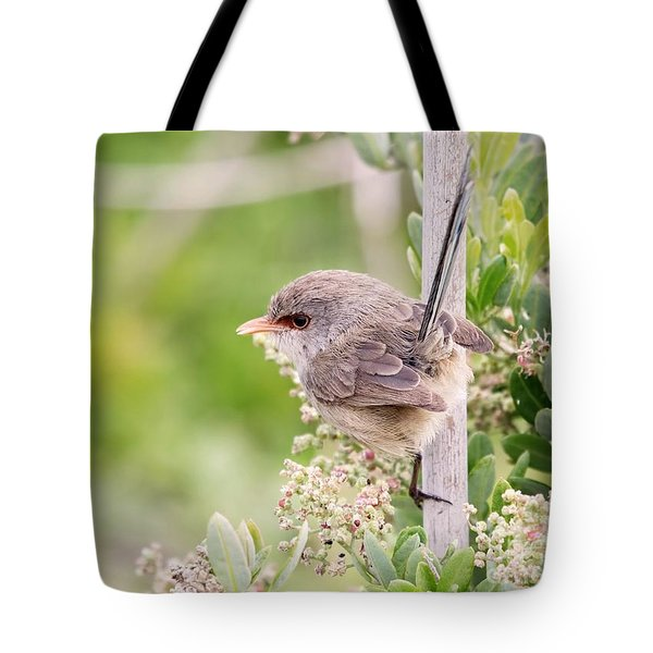 Variegated Fairywren  Tote Bag
