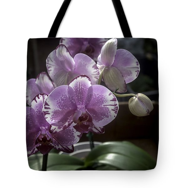Variegated Fuscia And White Orchid Tote Bag