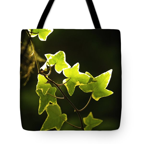 Tote Bag featuring the photograph Variegated Vine by Richard J Thompson