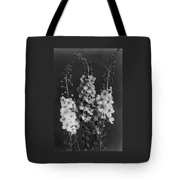Verbascum Phoeniceum Flowers Tote Bag
