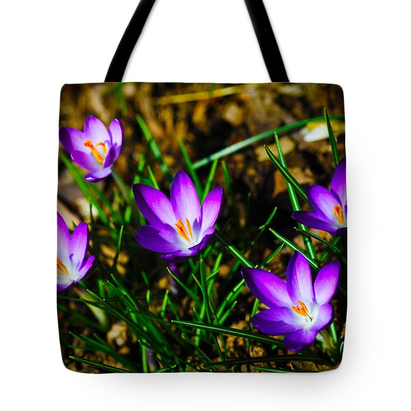 Vibrant Crocuses Tote Bag by Karol Livote
