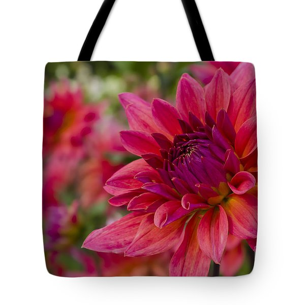 Vibrant Dahlias At Ferncliff Tote Bag by Maria Janicki