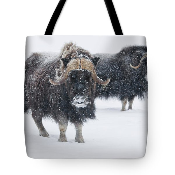 View Of A Pair Of Muskoxen Bulls Tote Bag