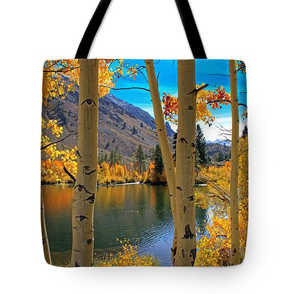 View Through The Aspens Tote Bag