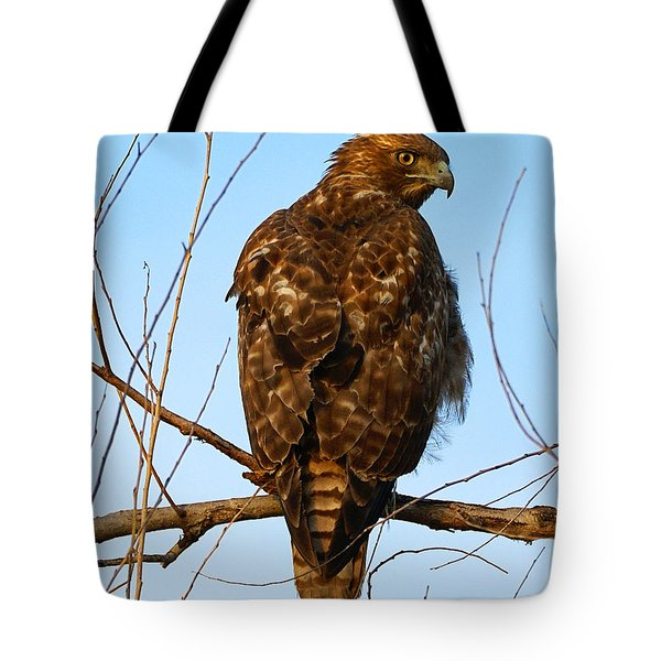 Vigilant Red-tailed Hawk  Tote Bag