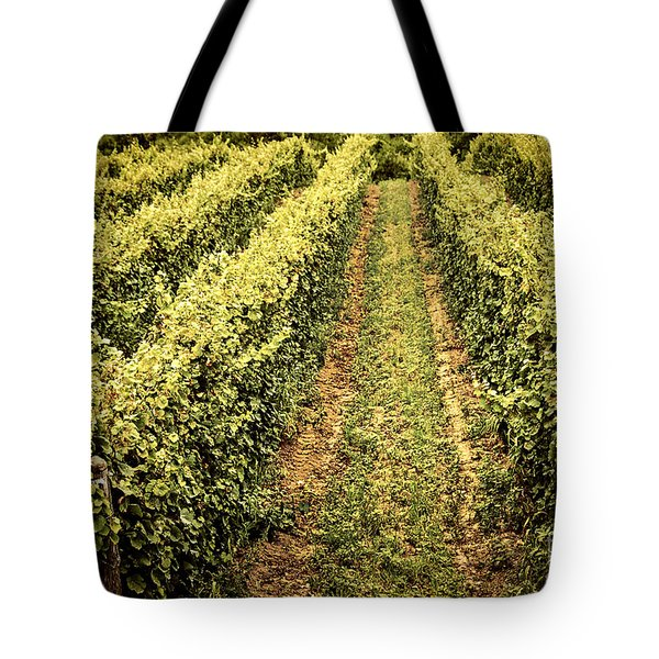 Vines Growing In Vineyard Tote Bag by Elena Elisseeva