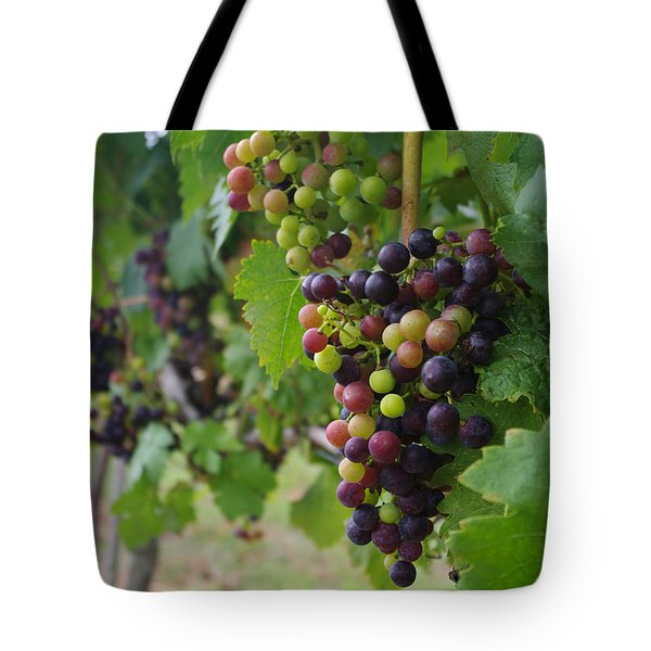 Vineyard Colors Tote Bag