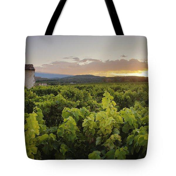 Vineyard Near Malemort-du-comtat Tote Bag by Andy Kerry