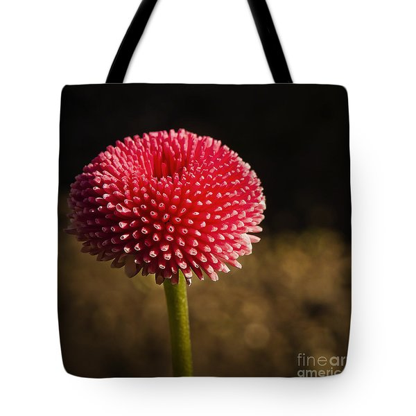 Tote Bag featuring the photograph Vintage Pomponette English  Daisy by MaryJane Armstrong