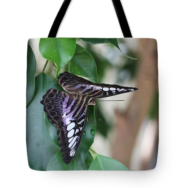 Violet Clipper Butterfly Tote Bag