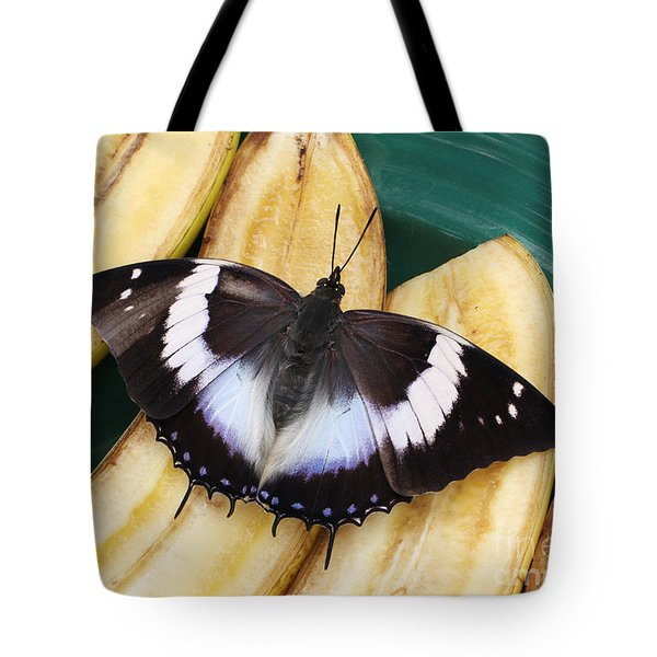 Violet-spotted Charaxes Butterfly Tote Bag