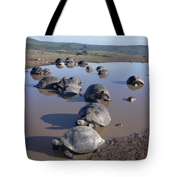 Volcan Alcedo Giant Tortoise Wallowing Tote Bag by Tui De Roy