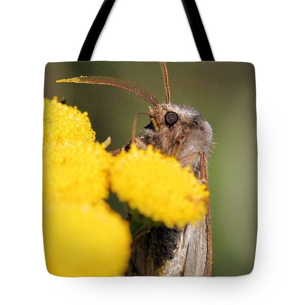 Voluble Dart Moth Tote Bag by Doris Potter