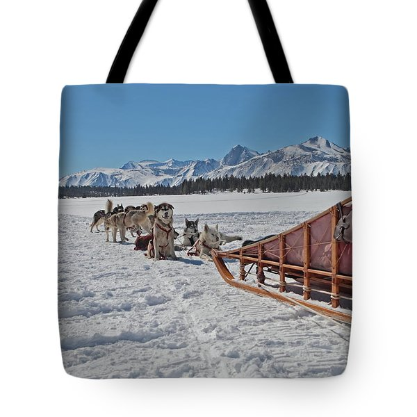 Waiting Sled Dogs  Tote Bag