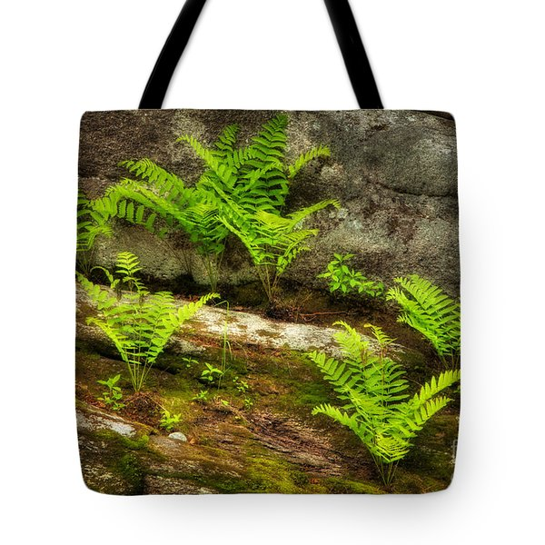 Tote Bag featuring the photograph Ferns by Alana Ranney