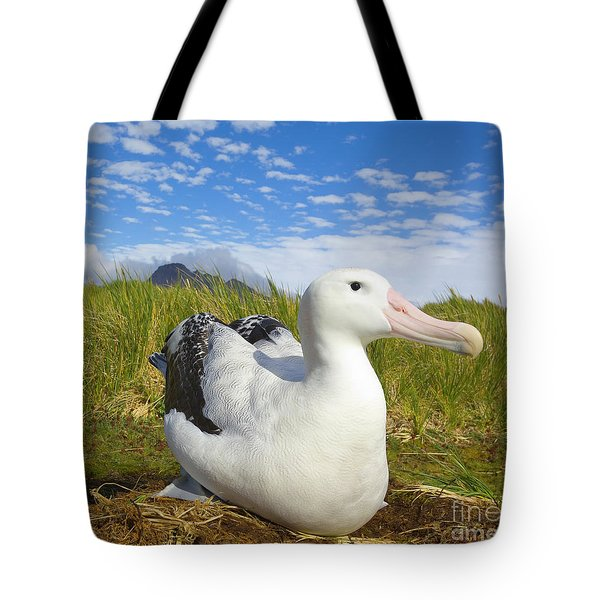 Wandering Albatross Incubating  Tote Bag by Yva Momatiuk John Eastcott