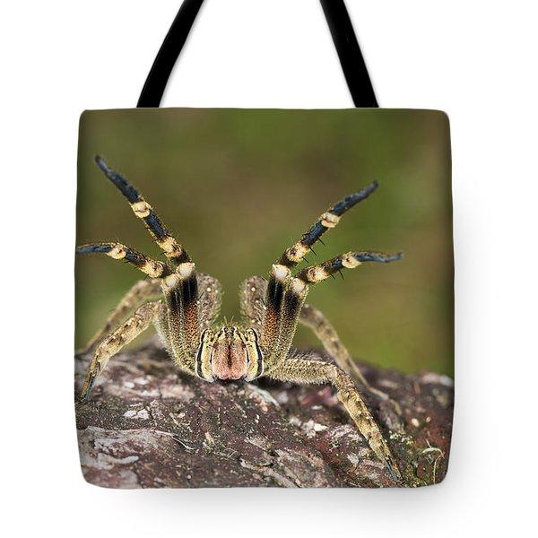 Wandering Spider In Defensive Posture Tote Bag by Konrad Wothe