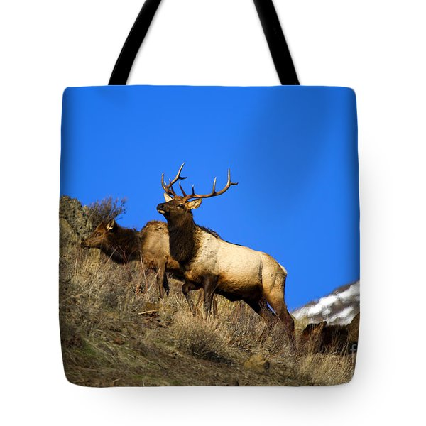 Watchful Bull Tote Bag by Mike  Dawson