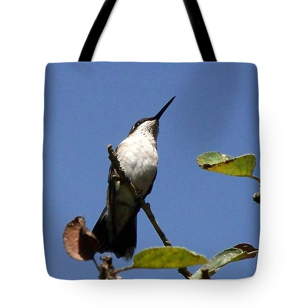 Watchful Female Hummingbird  Tote Bag by Eunice Miller