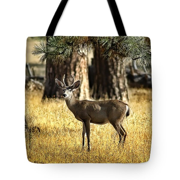 Watchful Young Buck Tote Bag