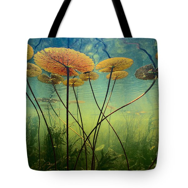 Water Lilies Tote Bag by Frans Lanting MINT Images