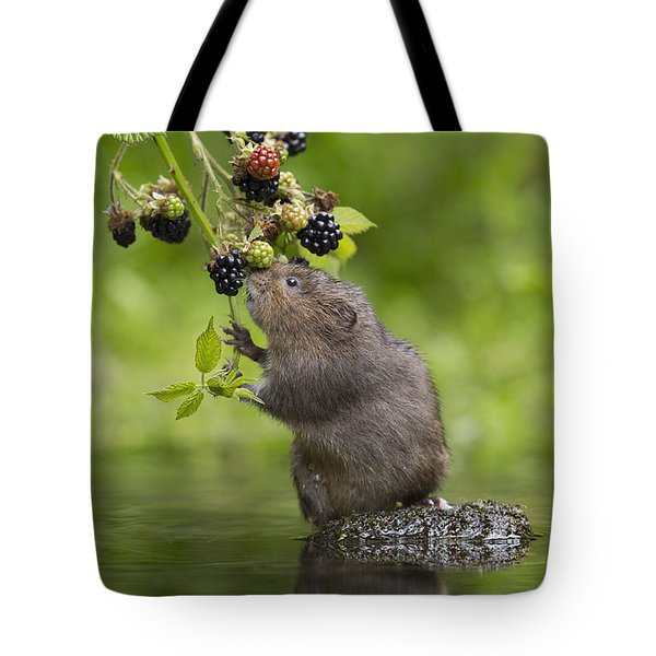 Water Vole Eating Blackberries Kent Uk Tote Bag