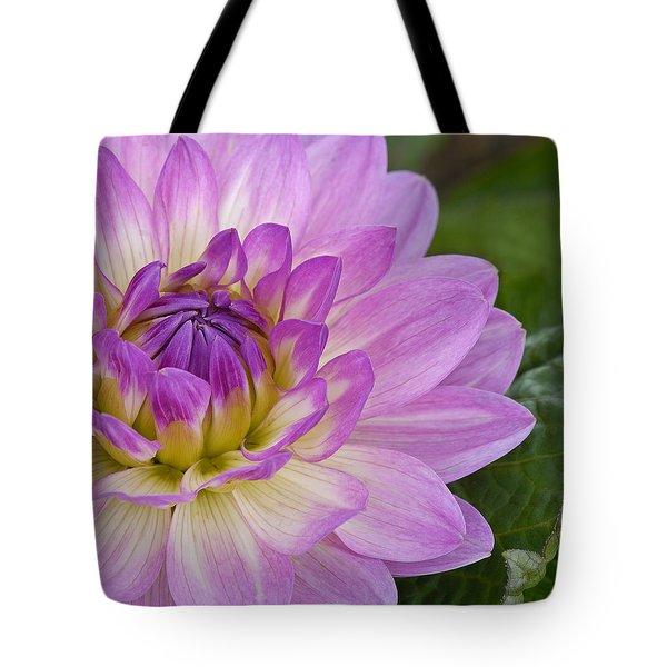Waterlily Dahlia Tote Bag