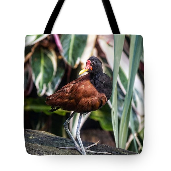 Wattled Jacana Tote Bag