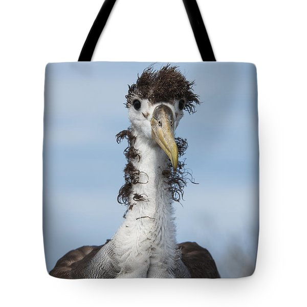 Waved Albatross Molting Juvenile Tote Bag by Pete Oxford