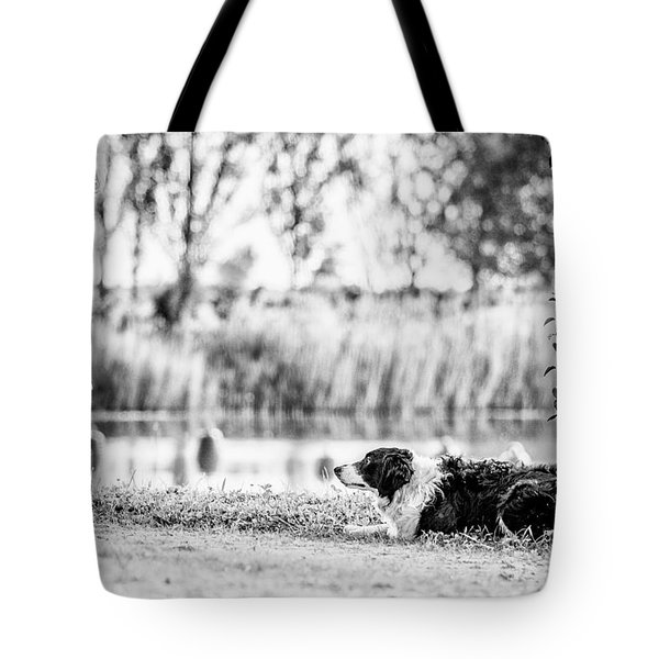 We Live As We Dream Tote Bag by Traven Milovich