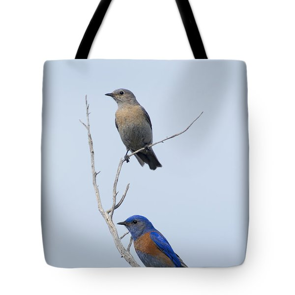 Western Bluebird Pair Tote Bag by Mike  Dawson