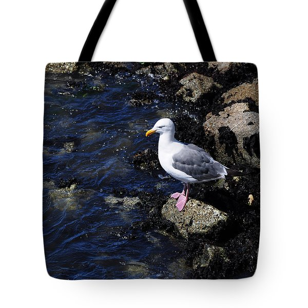 Tote Bag featuring the photograph Western Gull On Rocks by Susan Wiedmann