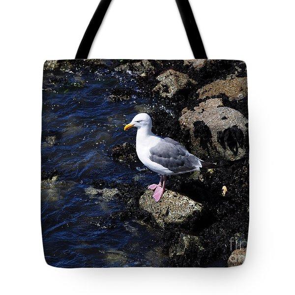Western Gull On Rocks Tote Bag