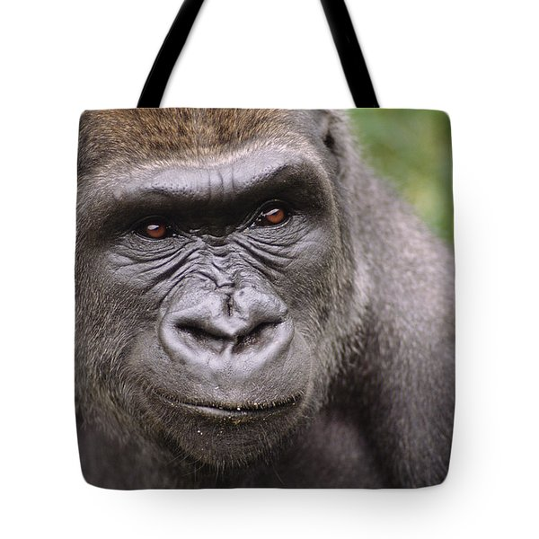 Western Lowland Gorilla Young Male Tote Bag by Gerry Ellis