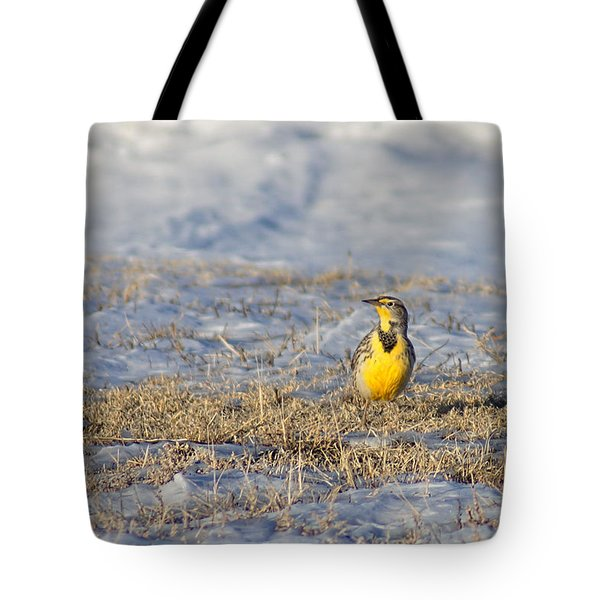 Western Meadowlark Tote Bag by Alan Hutchins