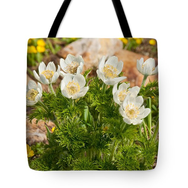 Tote Bag featuring the photograph Western Pasqueflower And Buttercups Blooming In A Meadow by Jeff Goulden