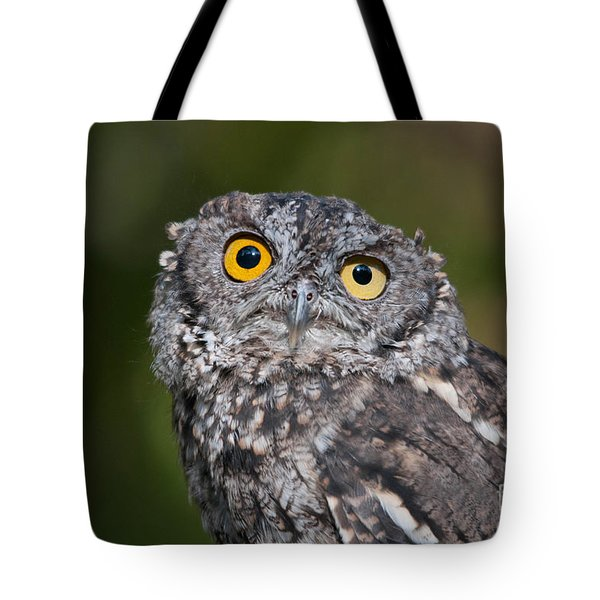 Western Screech Owl No. 3 Tote Bag