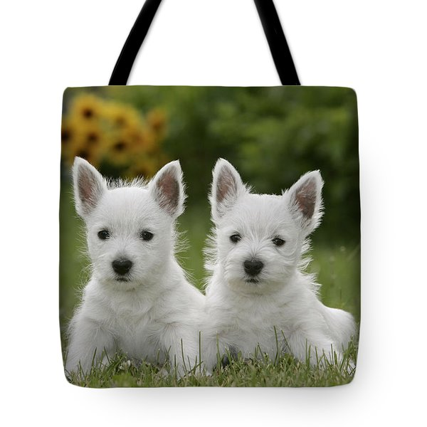 Westie Puppies Tote Bag by Rolf Kopfle