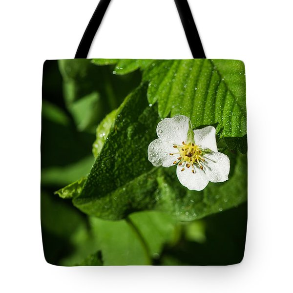 Wet Strawberry Flower - Featured 3 Tote Bag by Alexander Senin