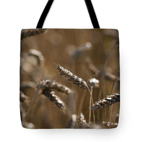 Wheat Tote Bag by Anne Gilbert