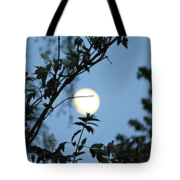 Where Are The Fairies Tote Bag by Jeanette C Landstrom